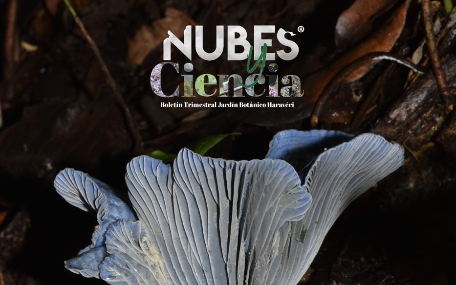 Boletín 05 – El Potencial Natural de Haraveri