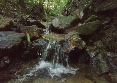 jardin-haraveri-arroyo-mesofilo